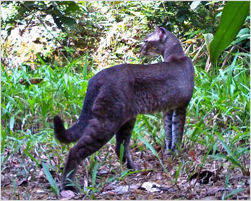 Кошка гуляет в лесу