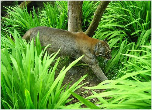 Кошка пробирается в зарослях леса