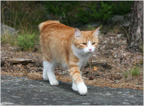 Кот гуляет по дороге