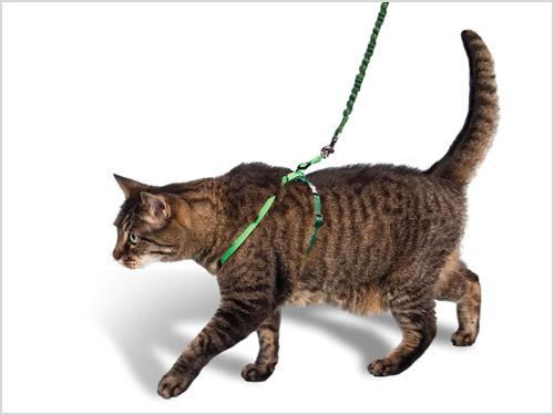 Выбор шлейки для кошки