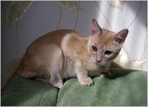 Кошка сидит на спинке дивана