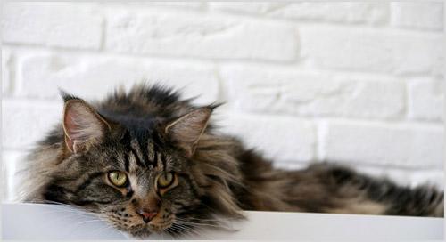 Кот лежит на полке