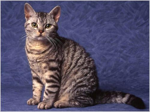 Фото сессия кота