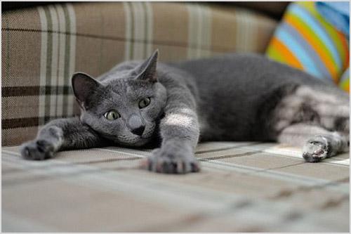 Больная кошка лежит на диване