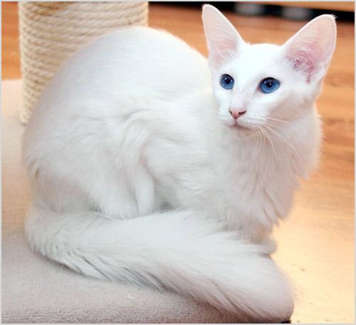 Кошка сидит на игровом комплексе