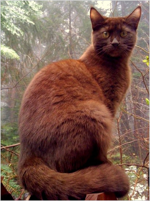 Кошка сидит на пеньке