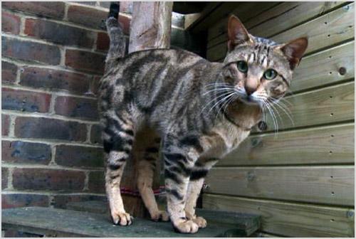 Кот стоит на табуретке