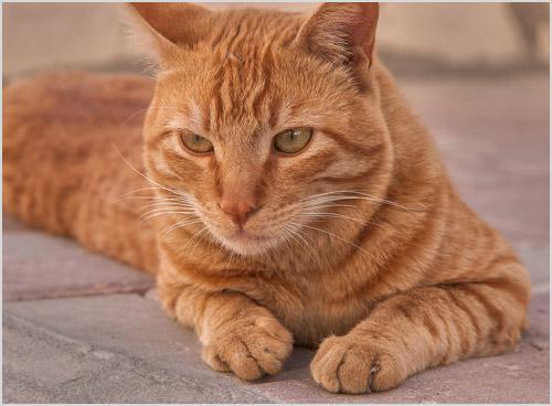 Кот лежит на мостовой