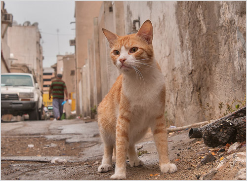 Кошка стоит на дороге