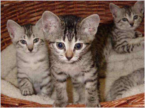 Котята сидят в корзине
