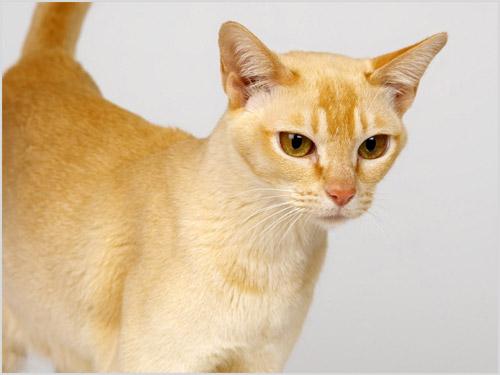 Кошка с серьезной мордочкой