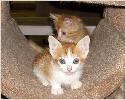 Котята бегают по домику