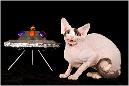 Фото кошки с летающей тарелкой