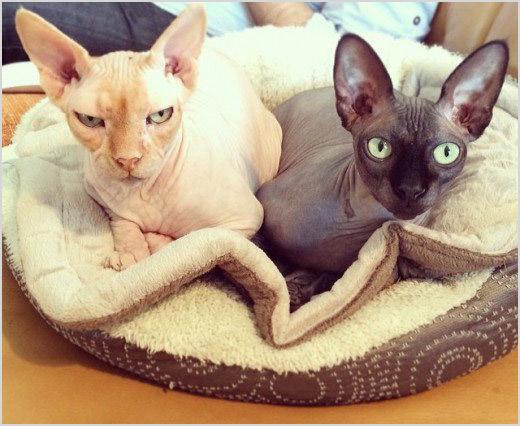 Кошки лежат на подстилке