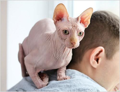 Кот сидит на плече у хозяина