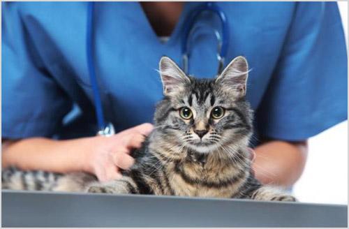 Обследование кошки