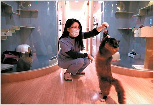 Игра с кошкой