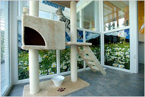 Вип гостиница для кошек