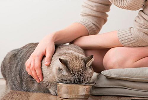 Женщина кормит кошку