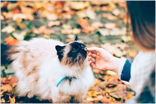 Девушка кормит кошку
