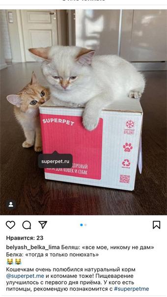 Котенок с кошкой
